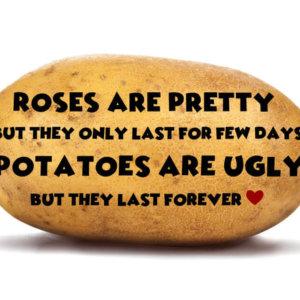 Roses are pretty